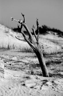 deadtree