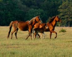 horses1-8x10