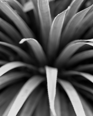 plant1